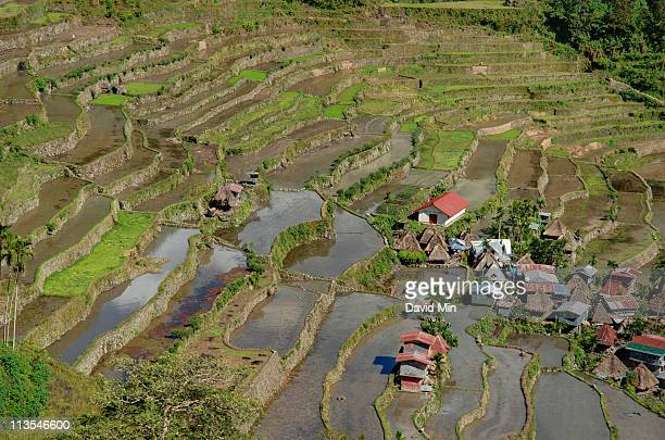 Batad, Philippines - Rice terraces