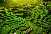 The 2000-year-old World Heritage Ifugao rice terraces in Batad, northern Luzon, Philippines.
