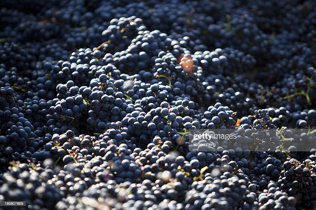 A batch of Fer servadou grapes sit in a trailer after being harvested at Jean-Luc Matha's vineyard in Clairvaux, France, on Wednesday, Oct. 23, 2013. France's stocks of wine fell to the lowest in at least 12 years after the country's production plunged 19 percent last year, crop office FranceAgriMer said. Photographer: Balint Porneczi/Bloomberg via Getty Images