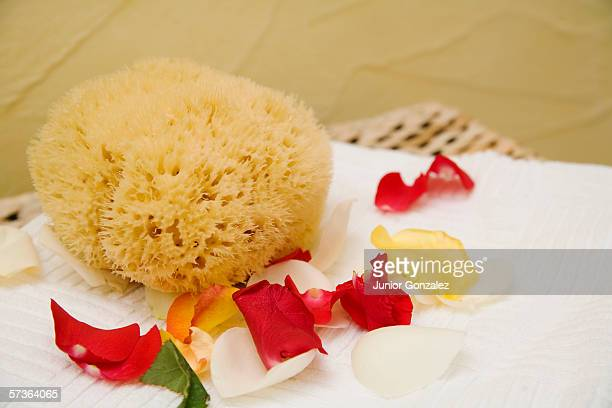 Bath sponge next to rose petals