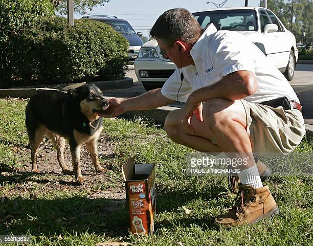 Animal lover Paul Carithers a telephone technician with Bell South who carries dog bones and cat food for just such emergencies tries to befriend a...