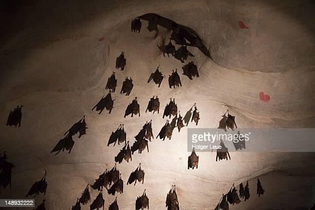 Bats hang from ceiling inside Lawa Cave near River Kwai Noi, near Kanchanaburi.
