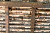Several batch hang under brown wooden roof