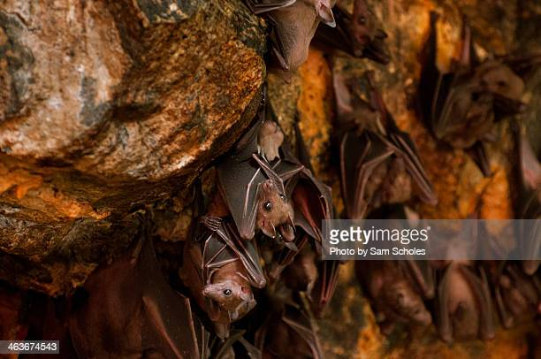 Bats hanging from the ceiling of a cave