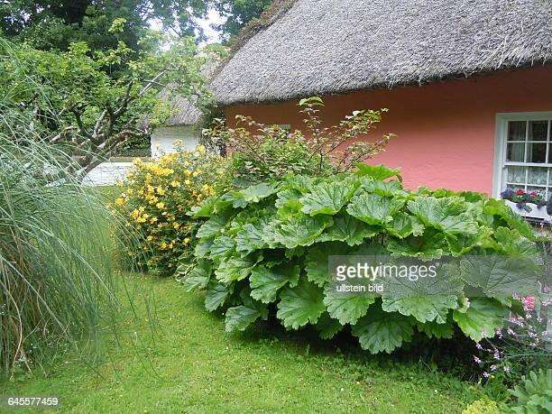 Bauernhaus mit Garten aufgenommen im Folklore Freilichtmuseum bei Bunratty Castle am 21 Juli 2015