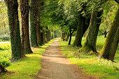 Baumallee im Stadt park von Güstrow