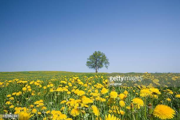 Bayerische beach tree