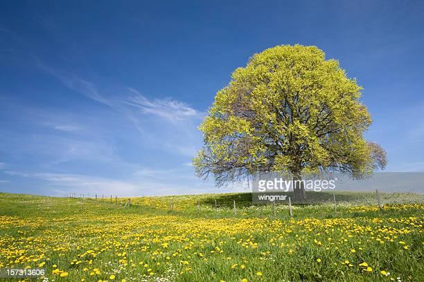 bavarian beach tree right