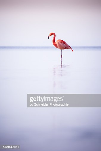 Bavarian Flamingo