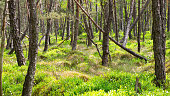 Wide angle shot of a deep green Bavarian forest in spring.