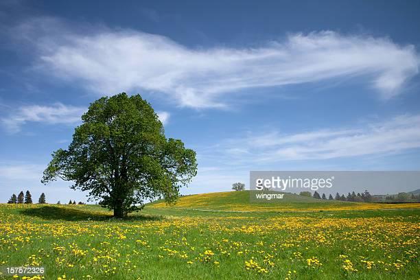Bayerische Frühling meadow