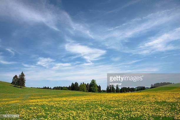 bavarian spring meadow