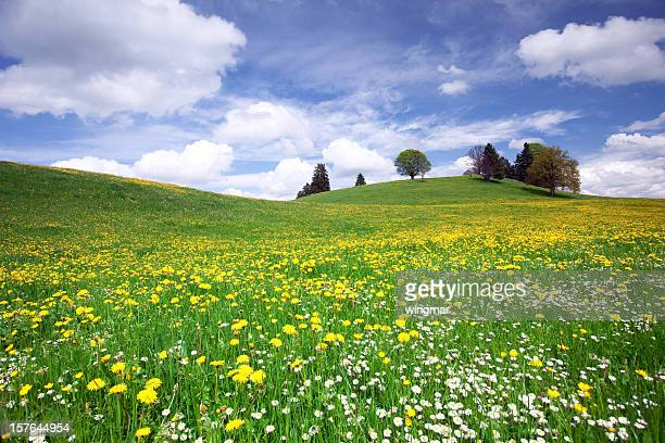 bavarian spring meadow