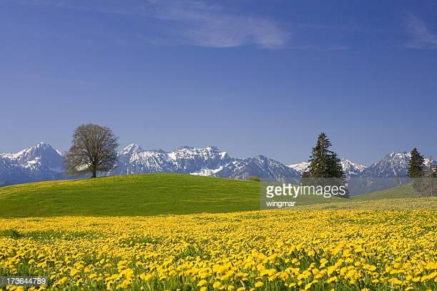 bavarian printemps Prairie