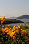 Bay Bridge in orange
