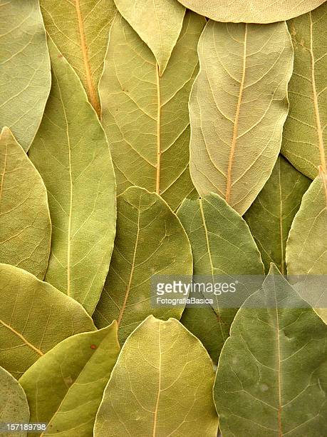 Bay leaves background