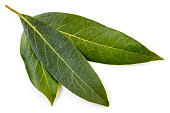 Bay leaves isolated on white.
