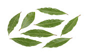 bay leaves isolated without shadow. set