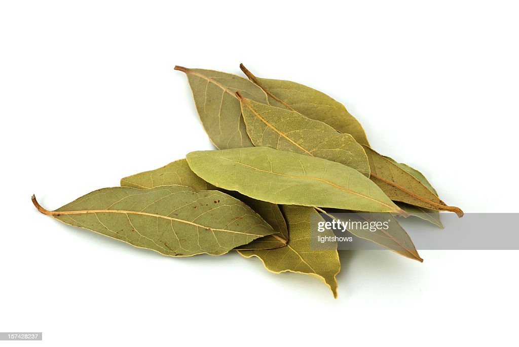 Bay leaves : Stock Photo