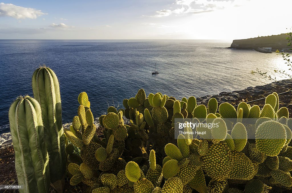 Bay with cacti at front, Laguna de Santiago, La Gomera, Canary Islands, Spain