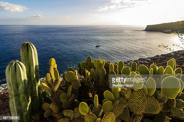 Bay with cacti at front, Laguna de Santiago, La Gomera, Canary Islands, Spain
