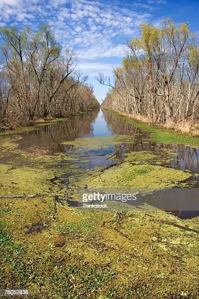 Bayou and slough in Louisiana