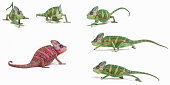 Red chameleon among green ones Standing out from the crowd concept