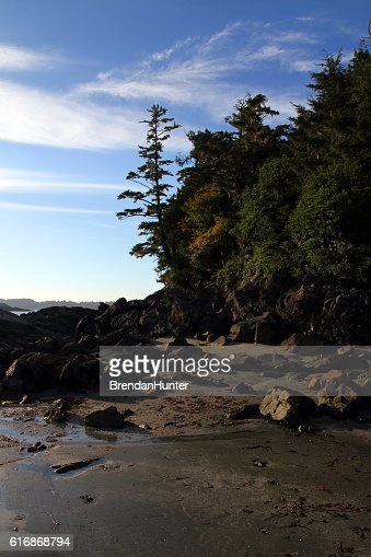 Beach at the Edge of the Tofino Forest : Stock Photo
