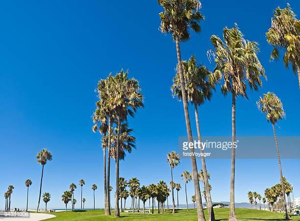 Beach blue palms
