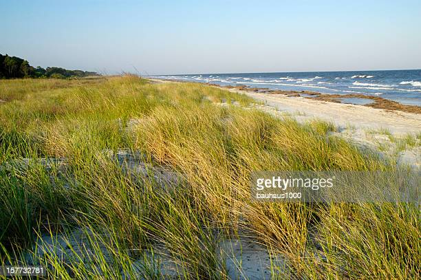 Beach Dunes and Sea Grass
