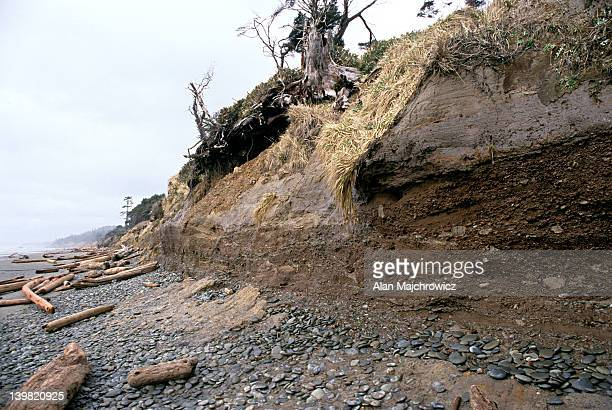Beach erosion during La Nina winter; Olympic National Park, Washington, USA