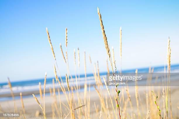 Beach Fresh