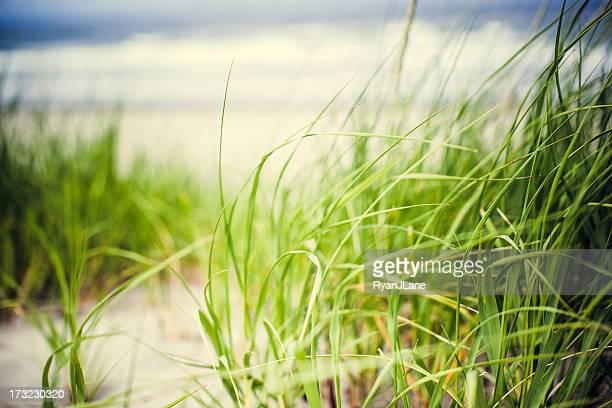 Strandgras an der Küste von Oregon