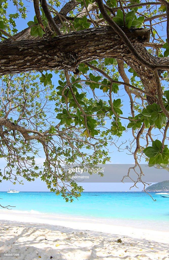 beach in the Similan Islands : Stock Photo