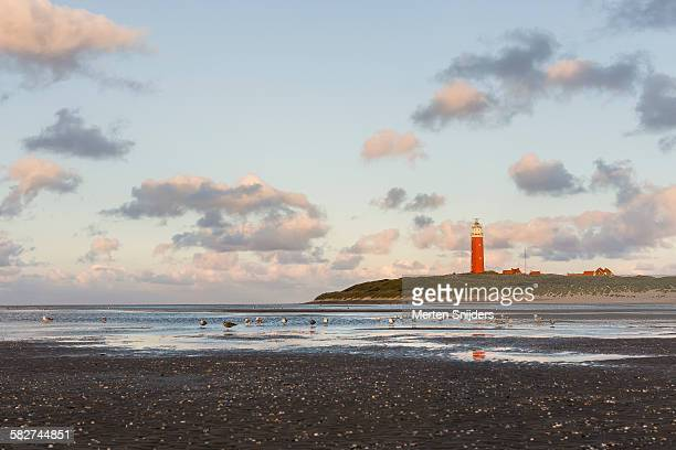 Beach landscape with lighthouse and seagulls