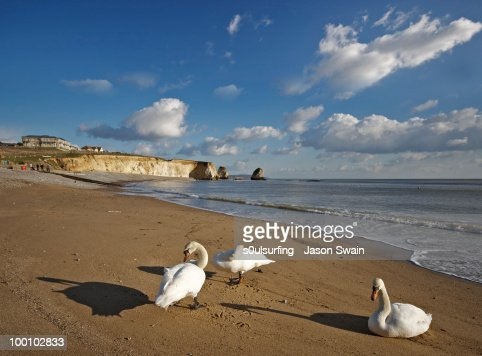 Beach life. 3 Swans at Freshwater Bay : Foto de stock