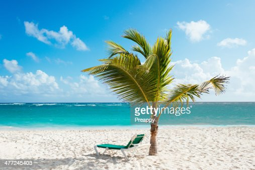 Beach lounger under palm tree