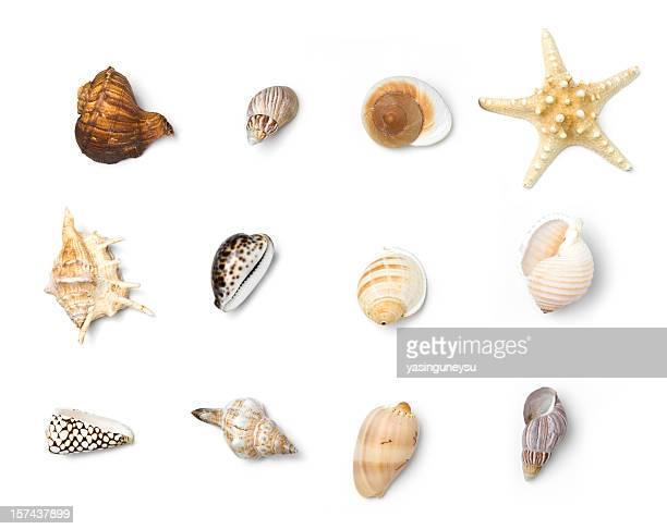Beach Objekte Series