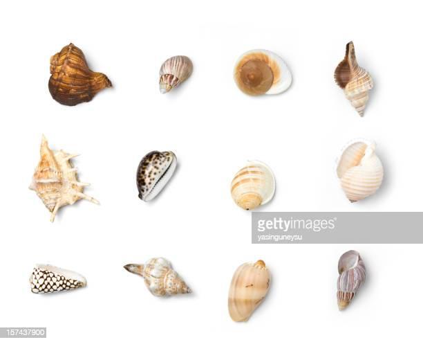 Beach Objects XXXL Series