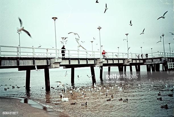 Beach, old wooden pier, flying birds, nostalgia, retro style, Poland