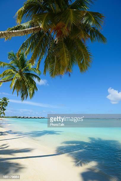 Palmier sur la plage et de villas sur pilotis de vacances