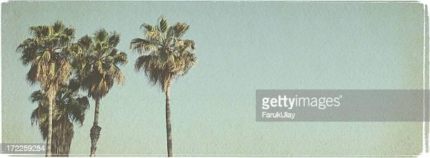 Beach Palms - Vintage Look Series