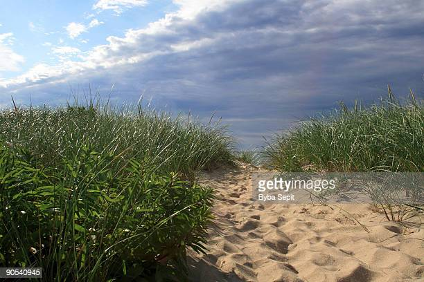 Beach path with tall green grass