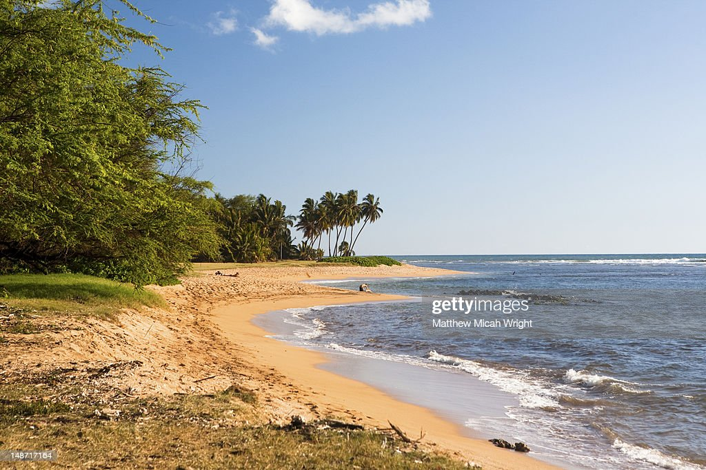 Beach. : Stock Photo