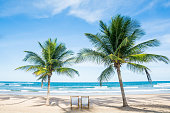 Beach Tropical Relax Palm