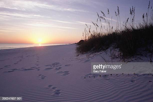 Beach Sand dune on Emerald Coast, Florida, USA