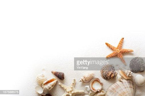 Beach Sand, Starfish, and Seashells Frame Border on White Background