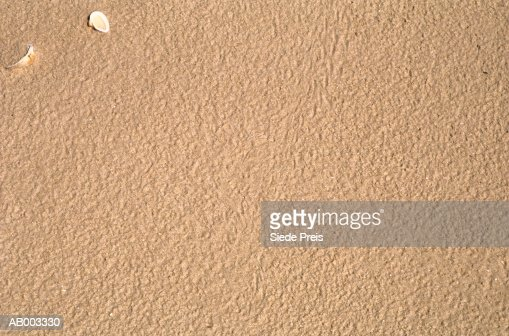 Beach Sand with Shells : Stock Photo