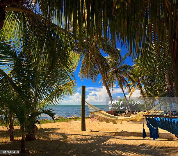 beach scene with hammocks and palm trees
