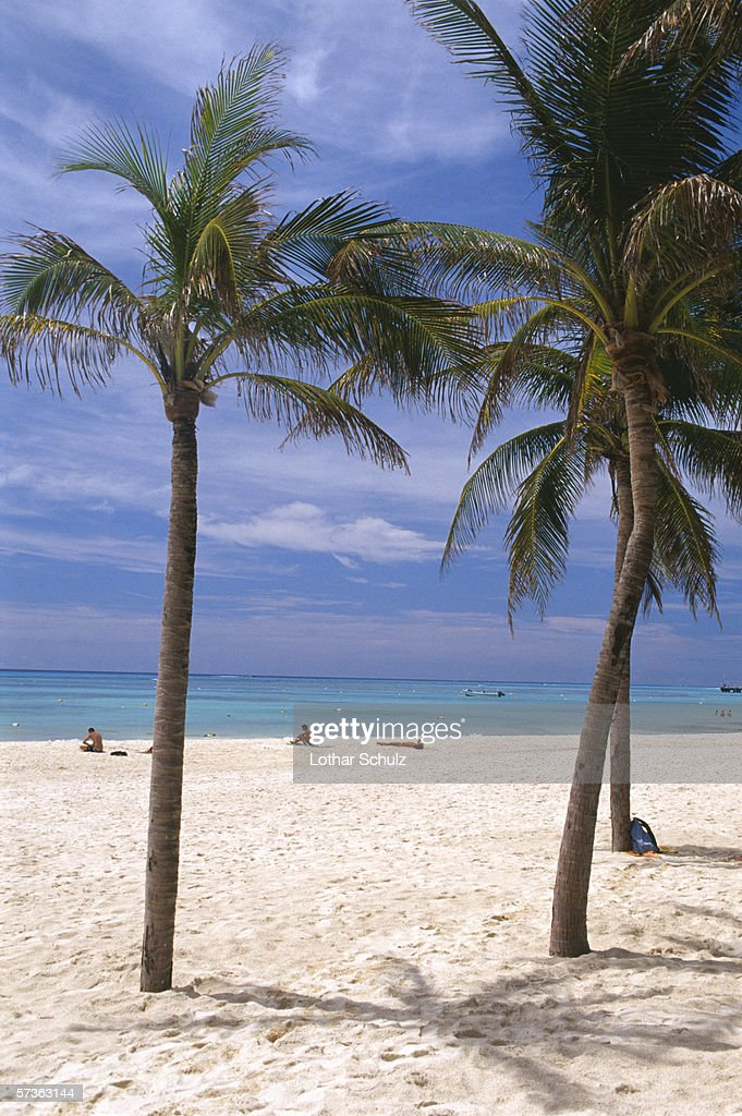 Beach scene with people sunbathing and palm trees, Yucatan, Mexico : Stock Photo
